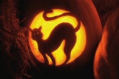Cat_in_pumpkin